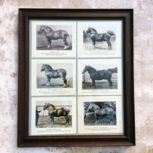 Six photographs of prize Suffolk Horses